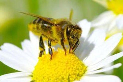 Wertvolle Bienen