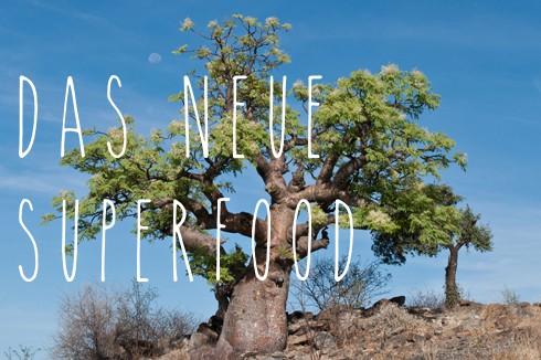 Moringa: der Wunderbaum und sein Pulver