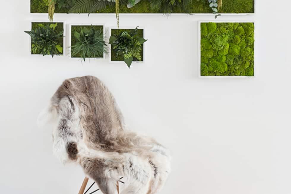 Green Interior: Moosbilder