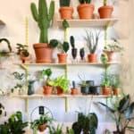 Wunderschöne Deko, die atmet - und sofort happy macht / Photo: The Botanical Room