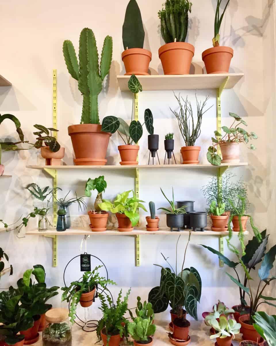 The Botanical Room: Der Online-Shop für grüne Daumen