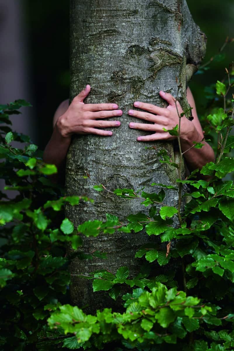 Der Baum-Umarmer: Warum dieser Professor am liebsten mit Bäumen schmust