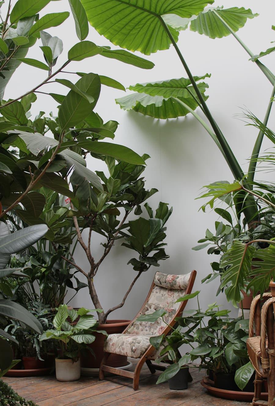 Das Comeback der Zimmerpflanze