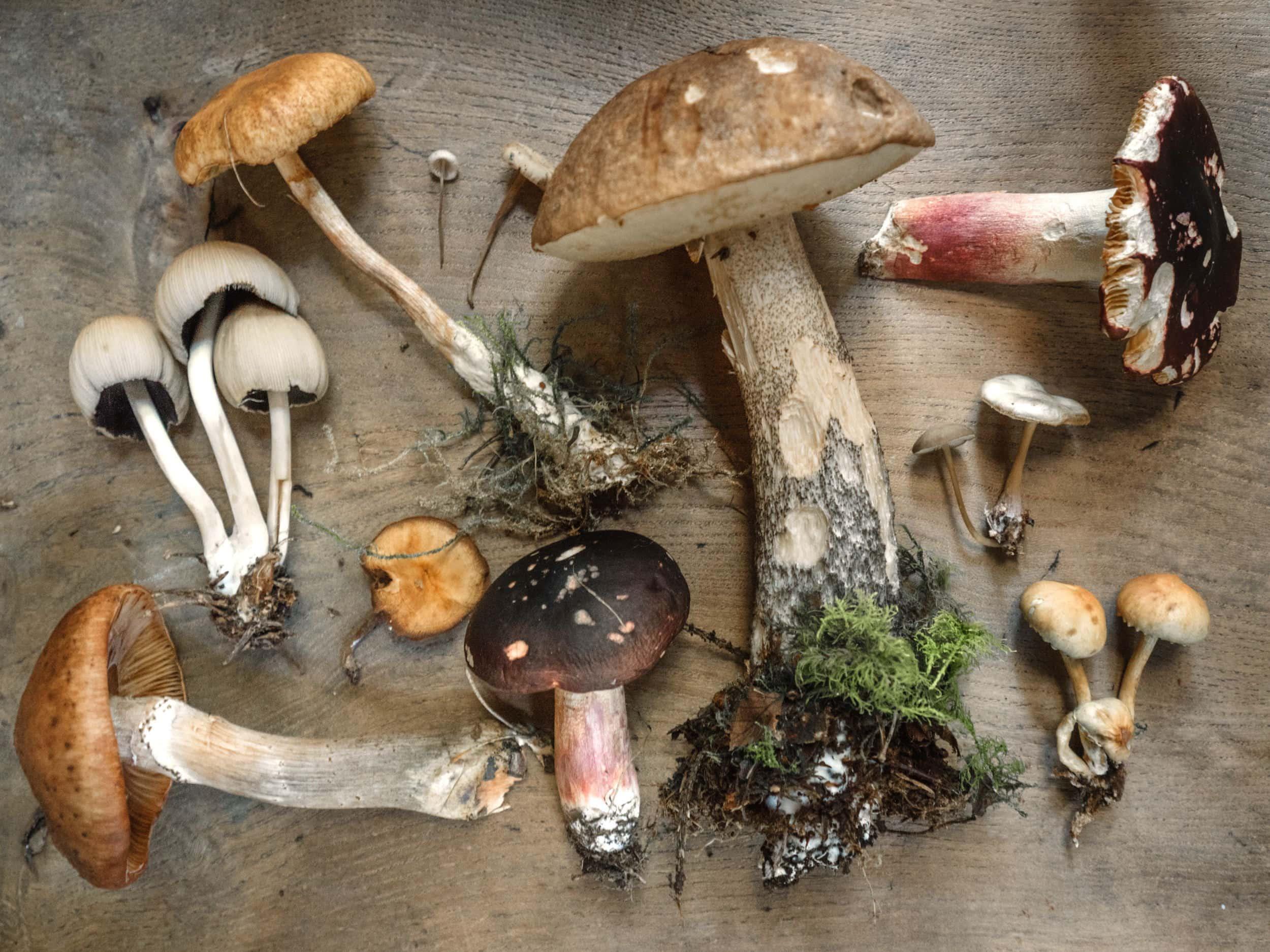 Pilz gesucht – Glück gefunden