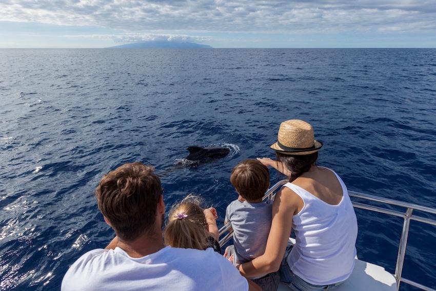 Wale beobachten auf Teneriffa