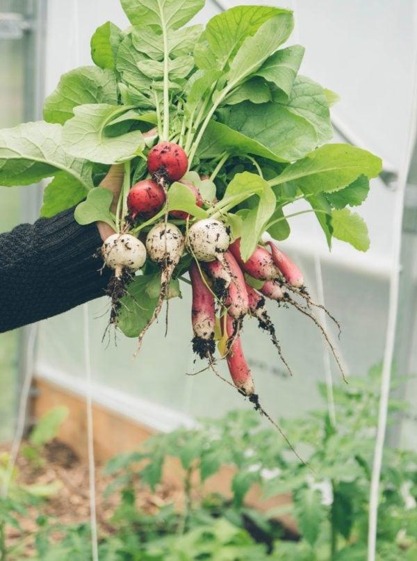 Indoor Farming: Diese Gemüsesorten pflanzen wir im Herbst