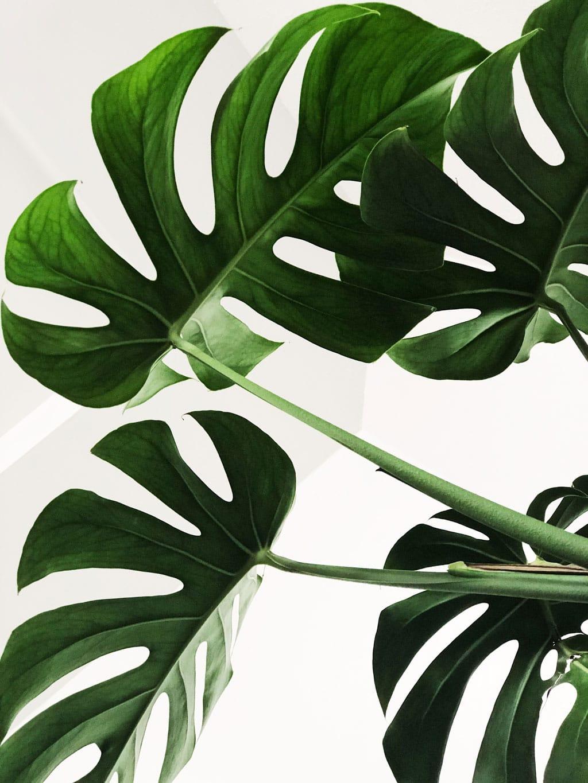 Urban Jungle - Wie nachhaltig ist der Pflanzenhype?
