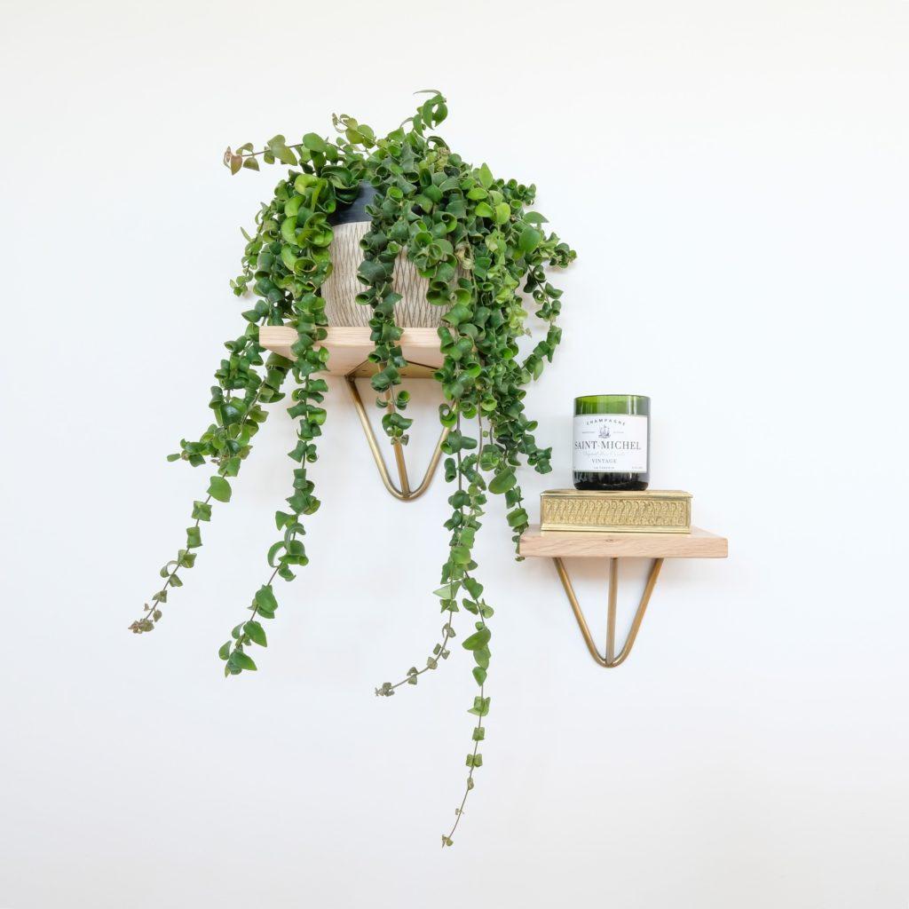 Pflanze auf einem Regal - Urban Jungle: Wie nachhaltig ist der Pflanzenhype?