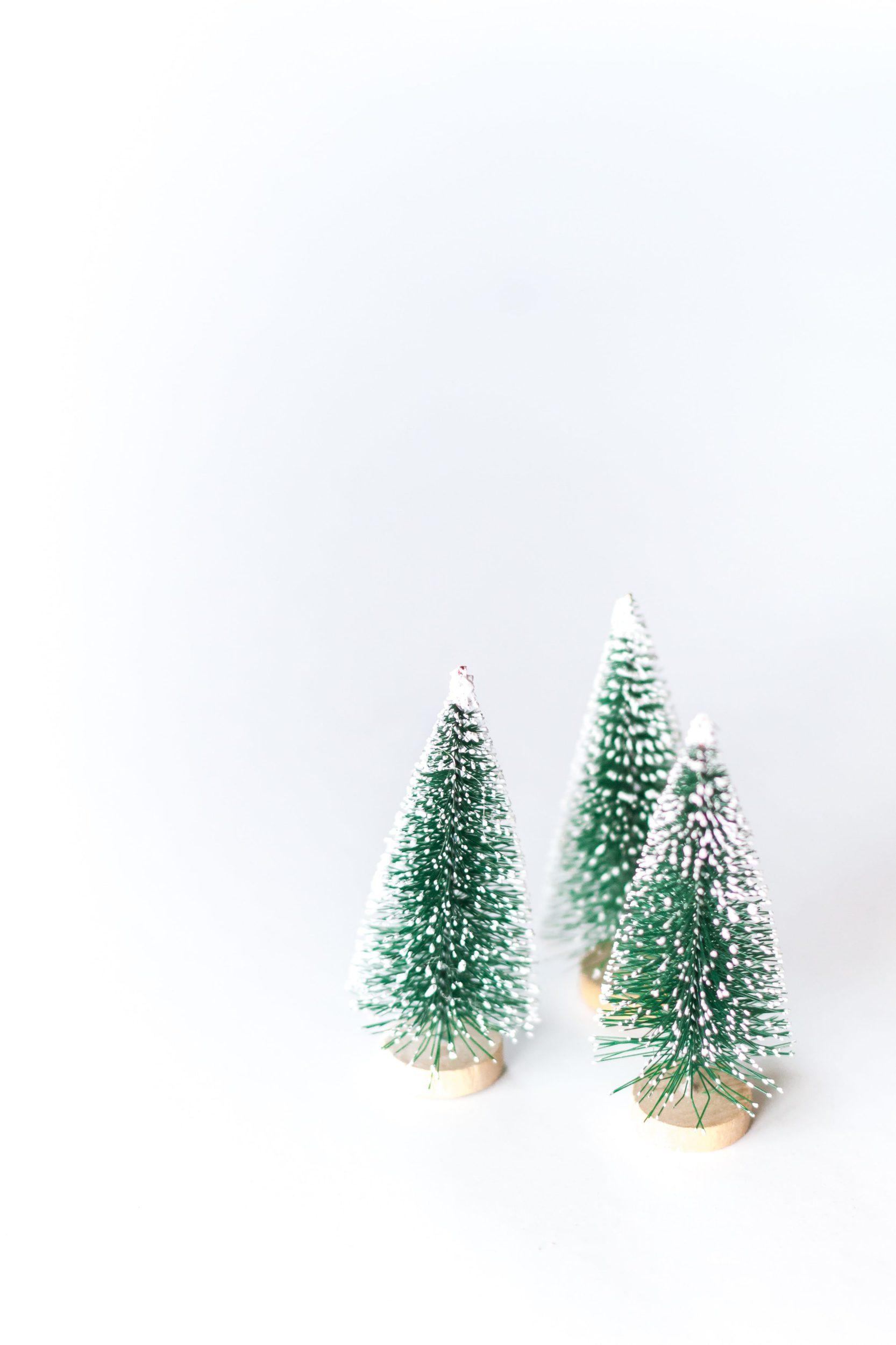 Wo ihr ökologische Tannenbäume kaufen könnt
