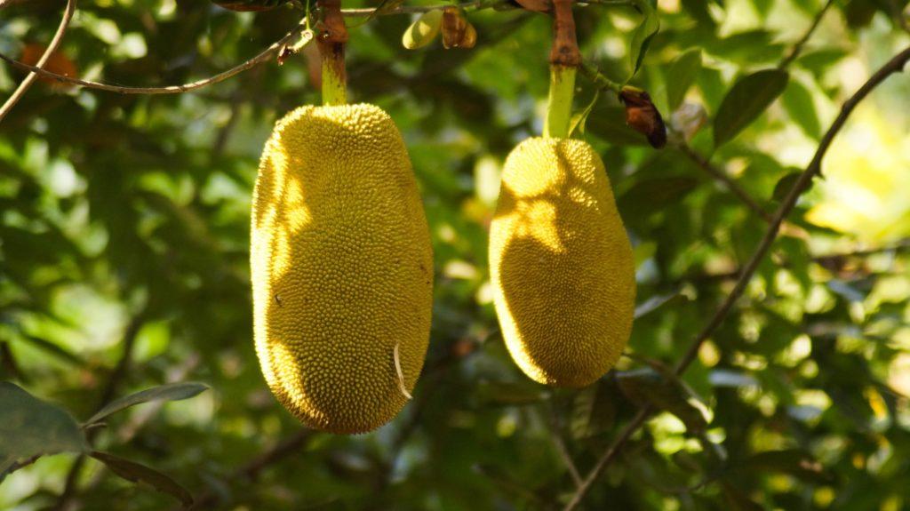 Veganuary: Fleischalternativen aus Jackfrucht